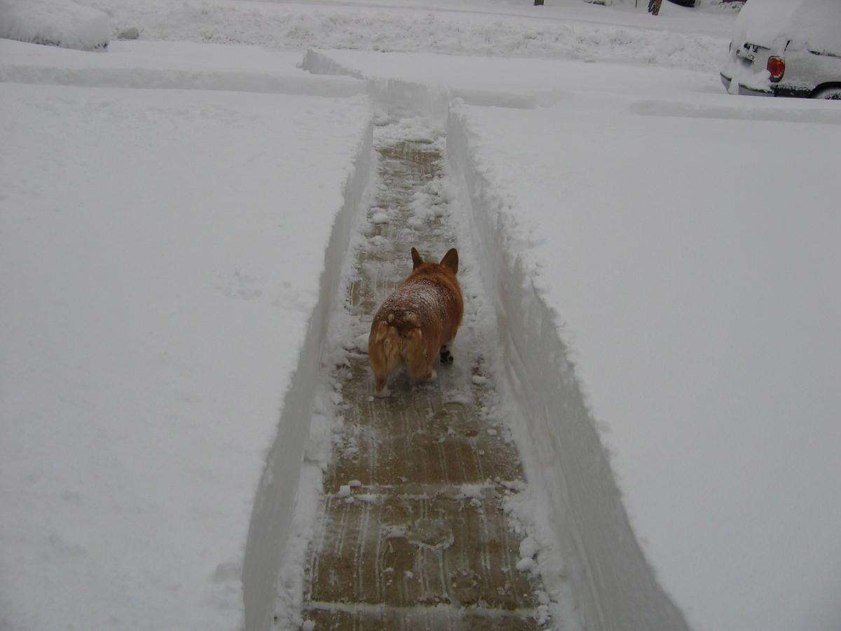 Said my goodbyes tonight-09-snow-storms-032b.jpg