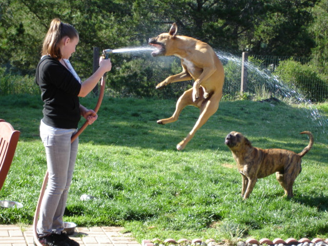 Yard Dogs-099.jpg