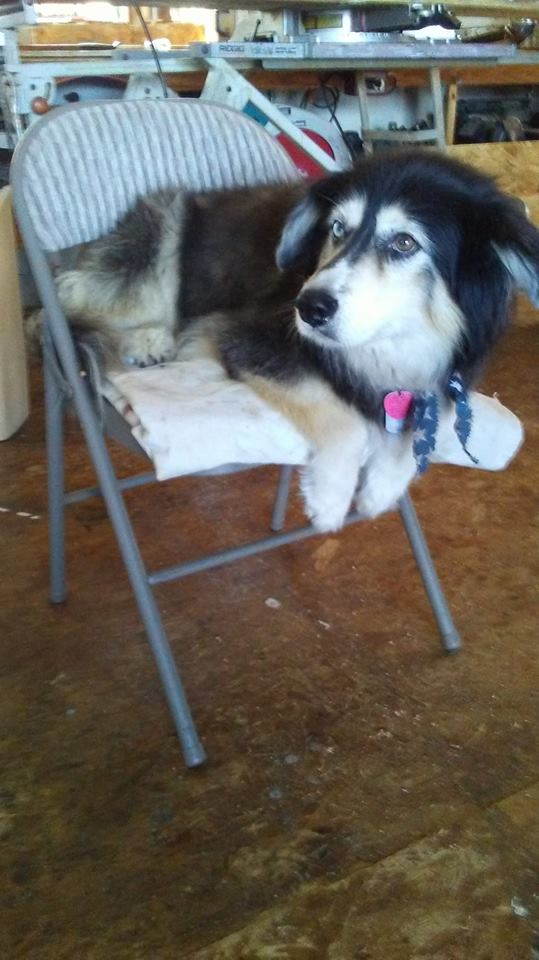 Show me pictures of your pets!-1-keiko.jpg