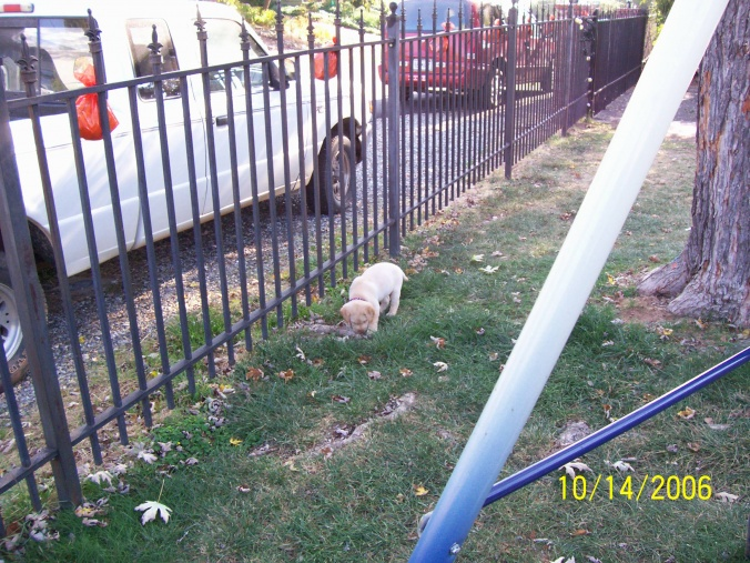 Yard Dogs-100_0533.jpg