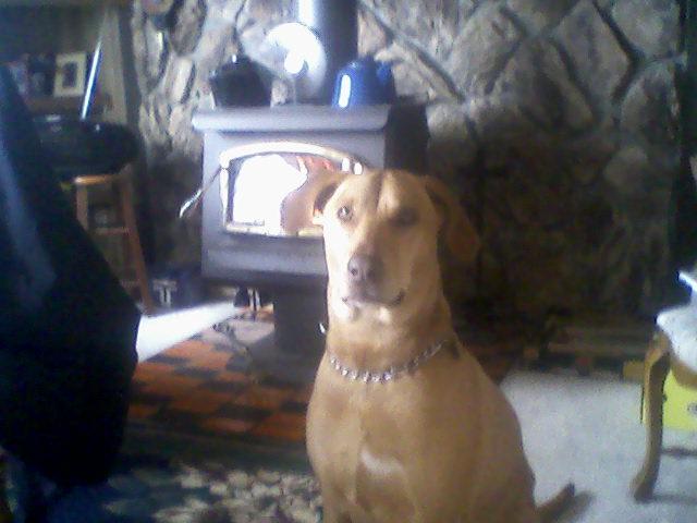 Yard Dogs-1229141305.jpg