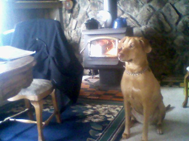 Yard Dogs-1229141305a.jpg