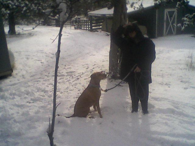 Yard Dogs-1229141326.jpg