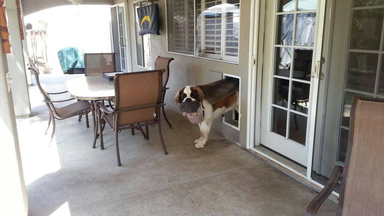 Yard Dogs-1422255213744.jpg
