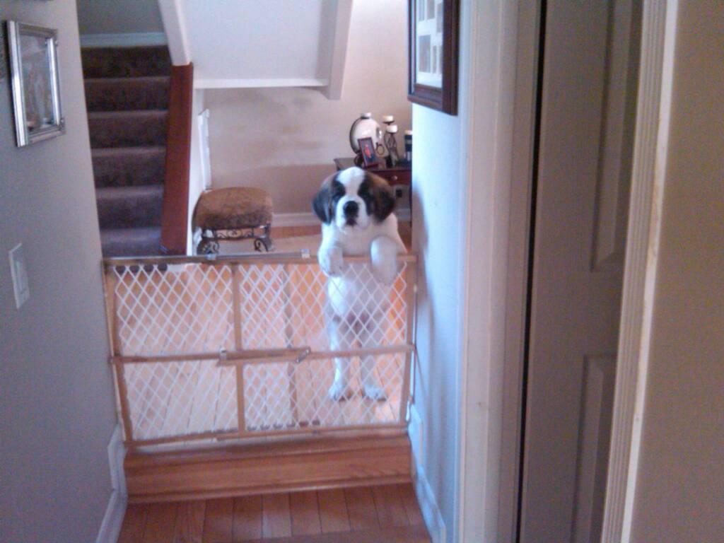 Yard Dogs-1448425998252.jpg