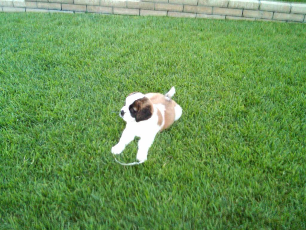 Yard Dogs-1448426156857.jpg