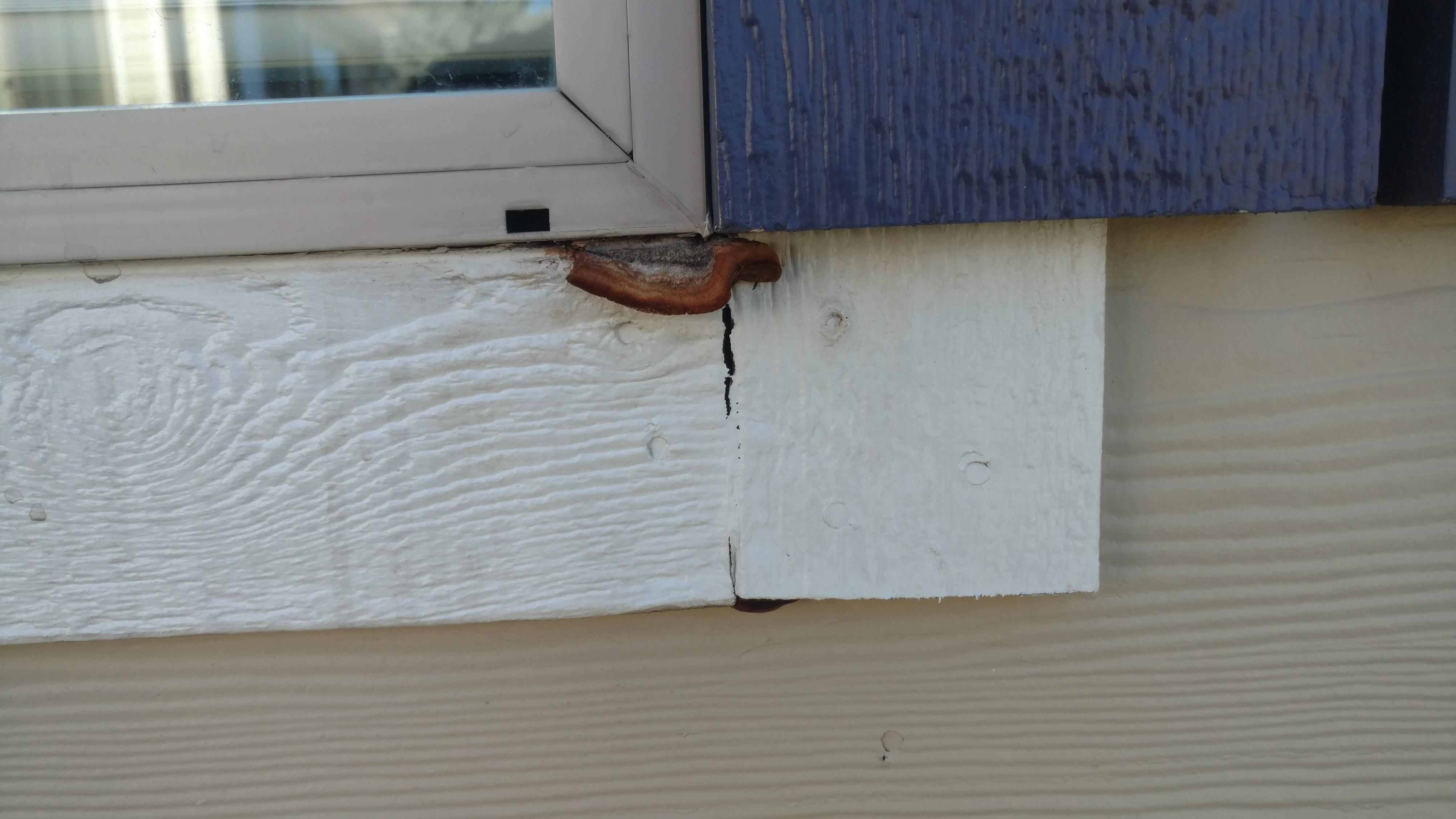 Four Year Old Window Trim Rotting-19-005.jpg