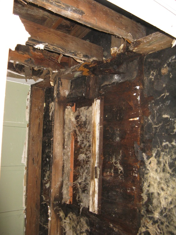 Best practices for removal of moldy drywall ???-410-crane-royal-oak-mi-back-law-house-024.jpg