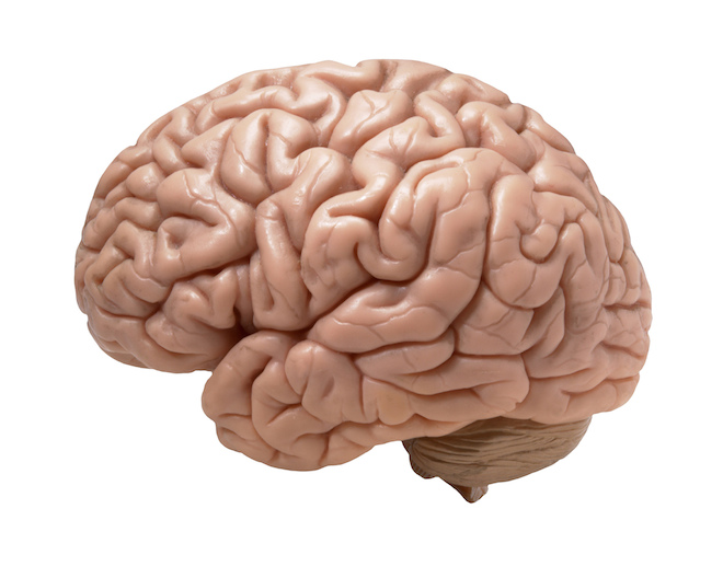 Software for takeoff,markup and estimating?-brain-real-looking.jpg