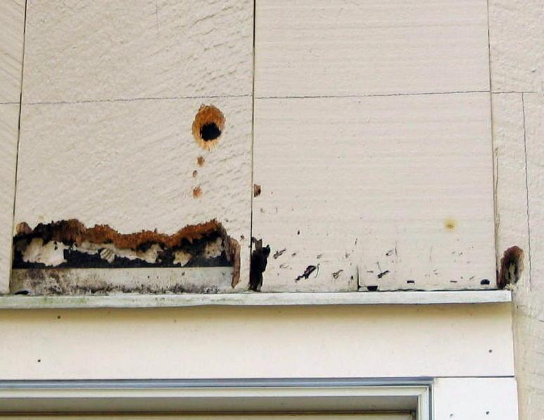 Woodpecker Damage To Cedar Siding Windows Siding And