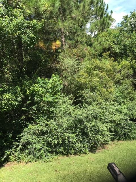 Forestry Mulching Before and After-brush-mowing-service.jpeg