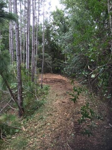Forestry Mulching Before and After-cost-clear-trails.jpeg