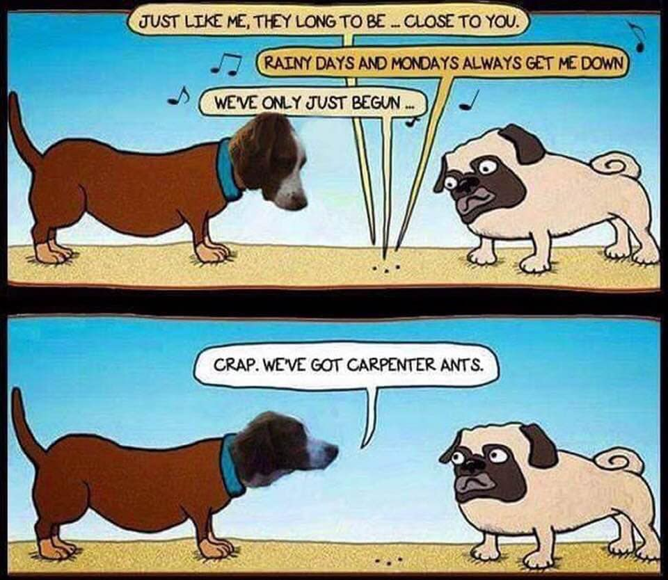 The Official CT joke duel page-dogs-carpenter-ants.jpg