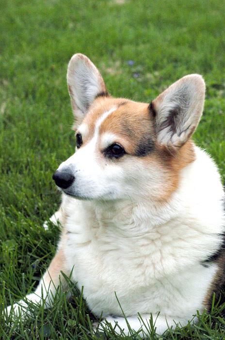 Yard Dogs-dsc2.jpg
