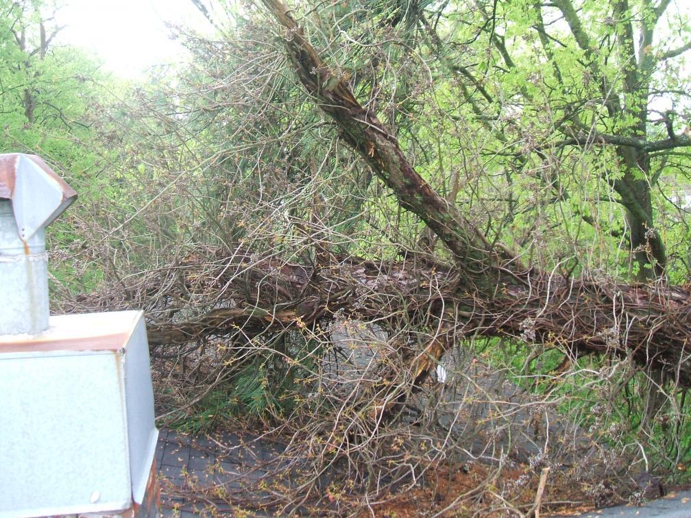 Up a tree-dscf0549.jpg.jpg