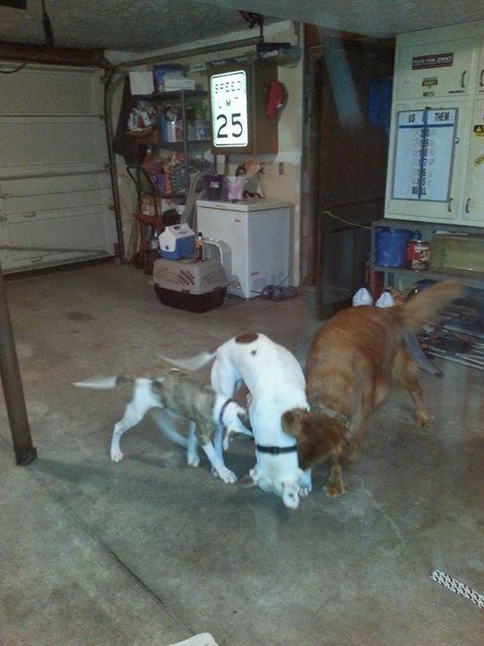 Yard Dogs-fighting.jpg