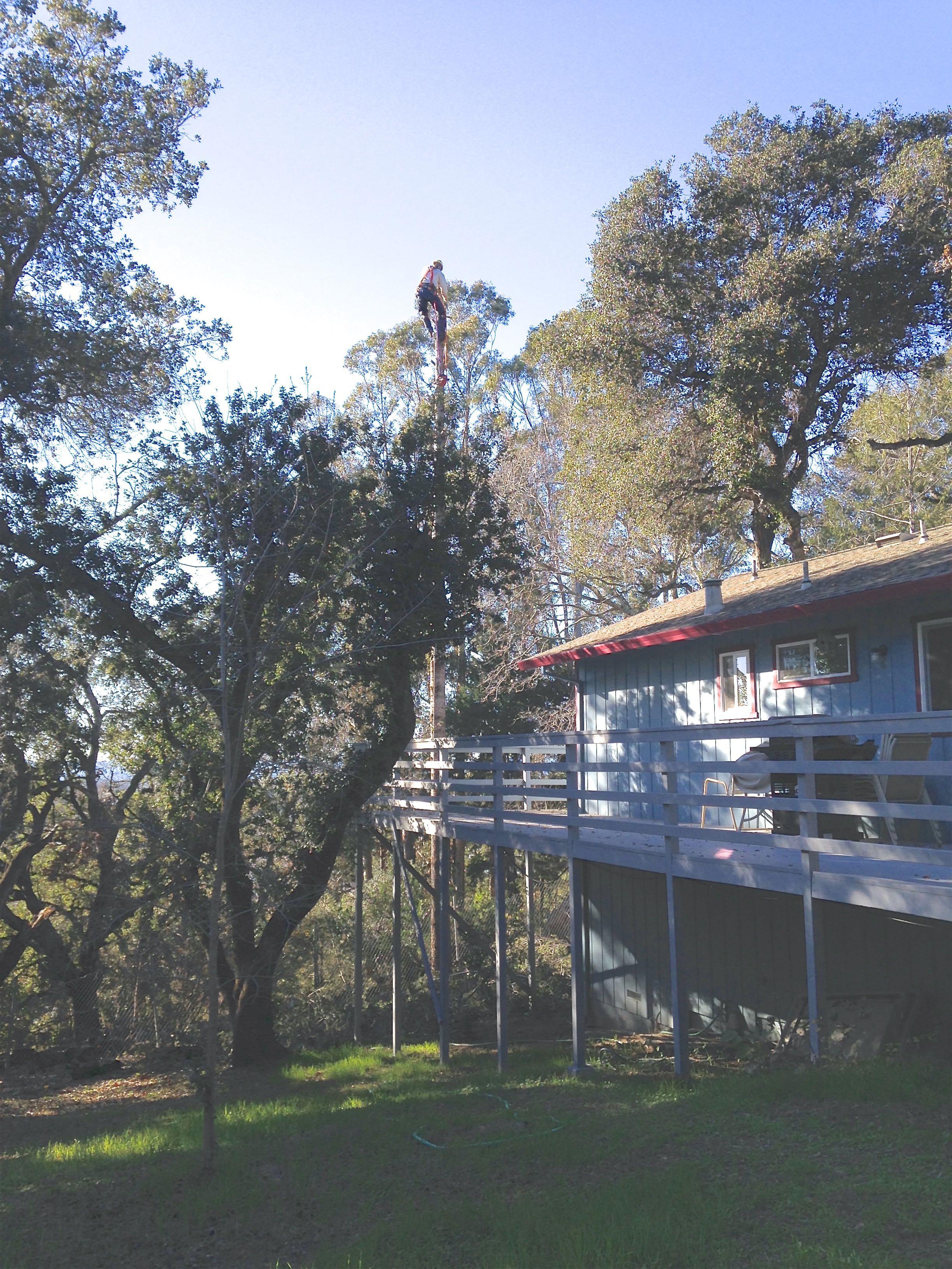 Tree cutting-fir-tree.jpg