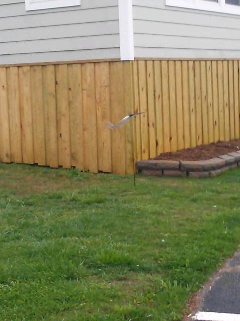 Cedar rot question decks fencing contractor talk - Fake brick skirting ...