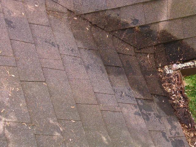 Granule loss on Landmark shingle-fox-006.jpg