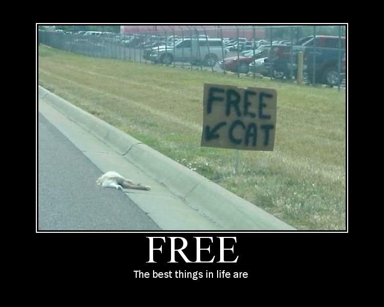 50079d1307493315-lost-cat-free-cat.jpg