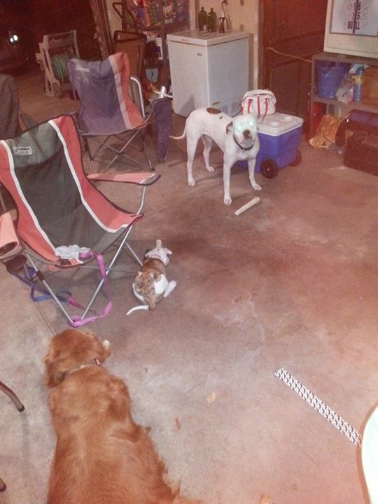 Yard Dogs-garage.jpg