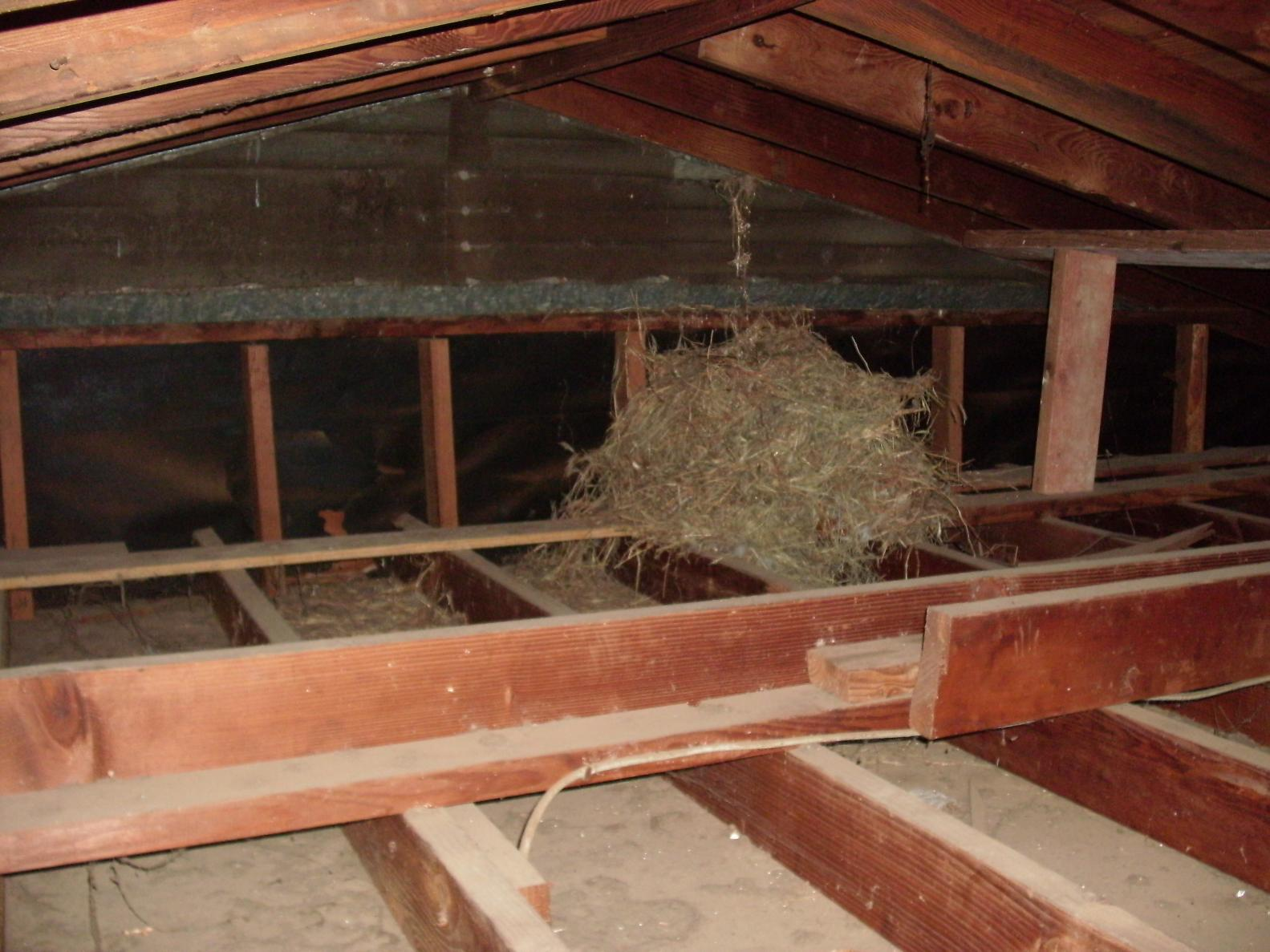 Large Nest In Attic Construction Contractor Talk