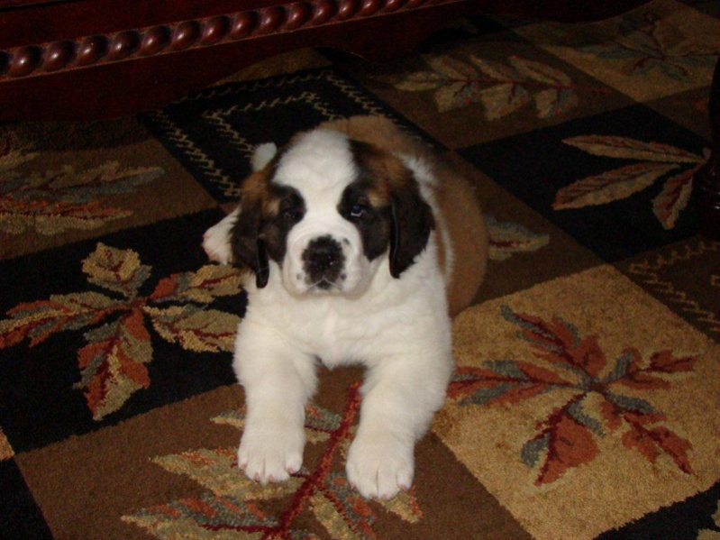 Dog breed thread-image-1683623358.jpg
