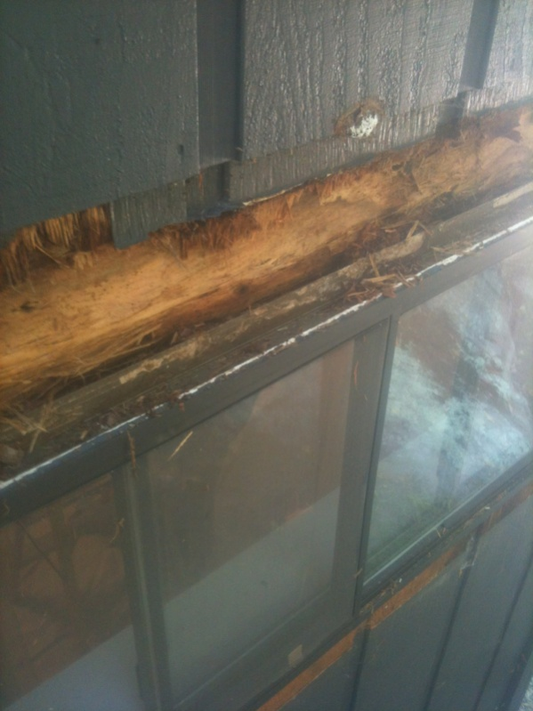 T1 11 In True 11 Quot Replacing Trim Windows Siding And