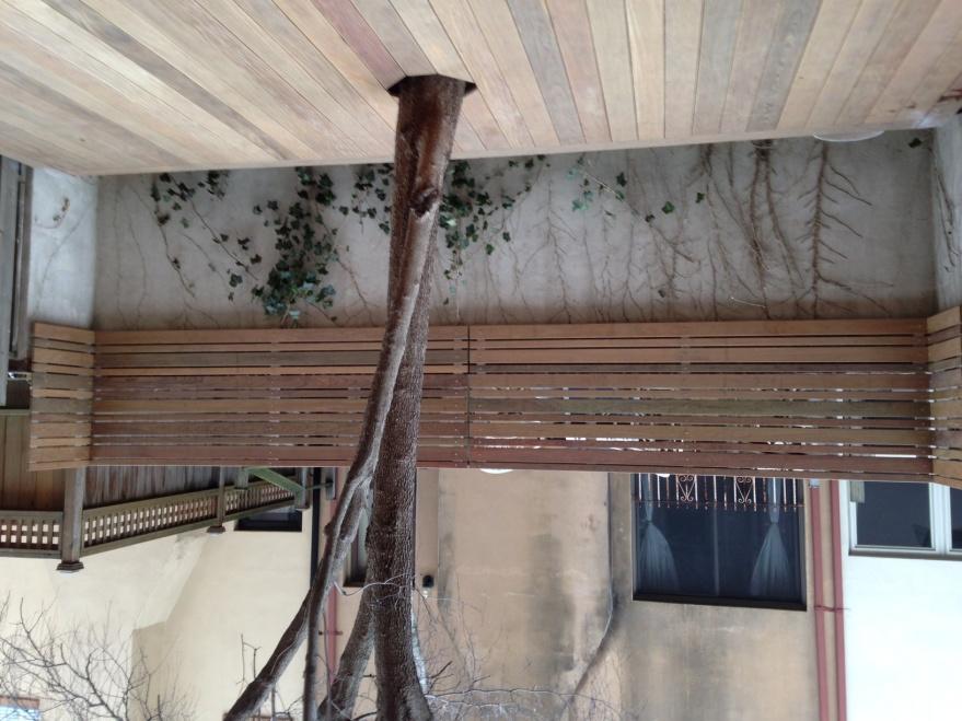 Deck around tree?-image_3.jpg