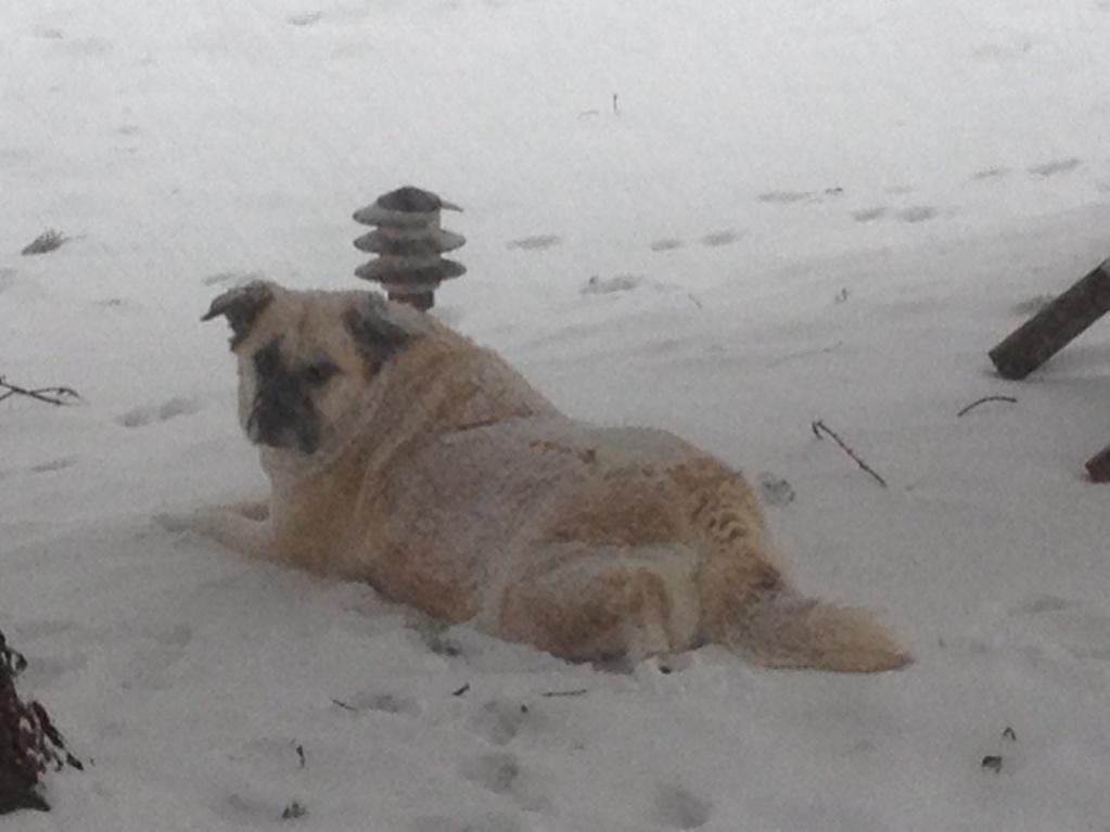 Yard Dogs-imageuploadedbycontractortalk1424555527.284409.jpg