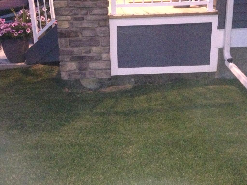 Fixing low spot in lawn-imageuploadedbycontractortalk1440855725.403133.jpg