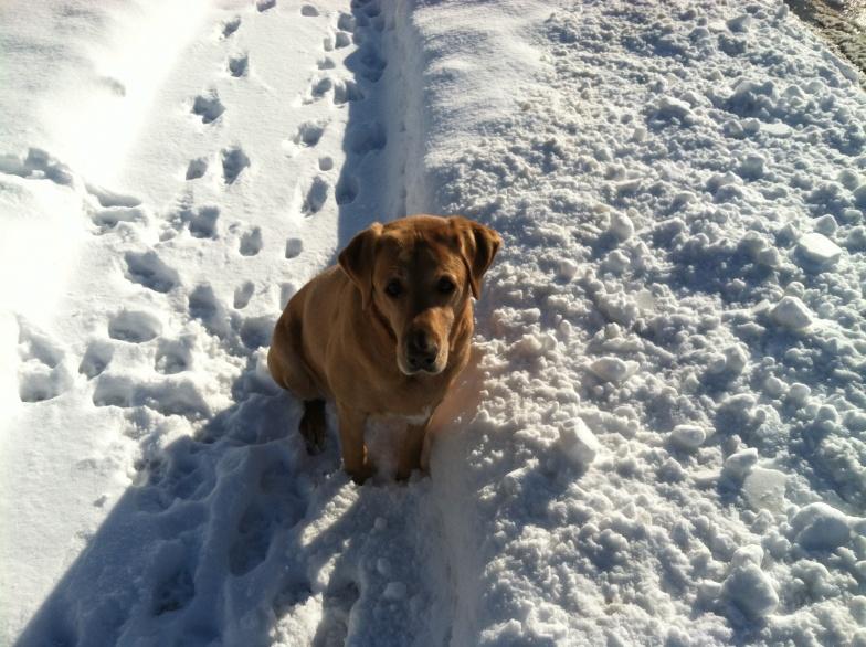 Yard Dogs-img_0367.jpg