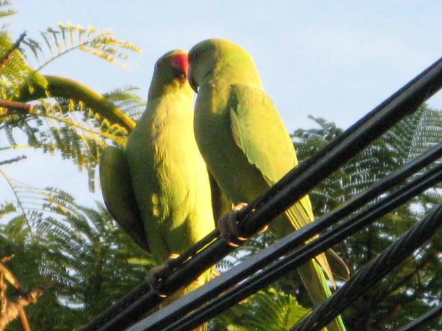 Drywall eating parrot-img_3288.jpg