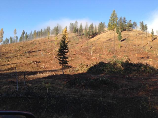 Tree cutting-img_9170.jpeg