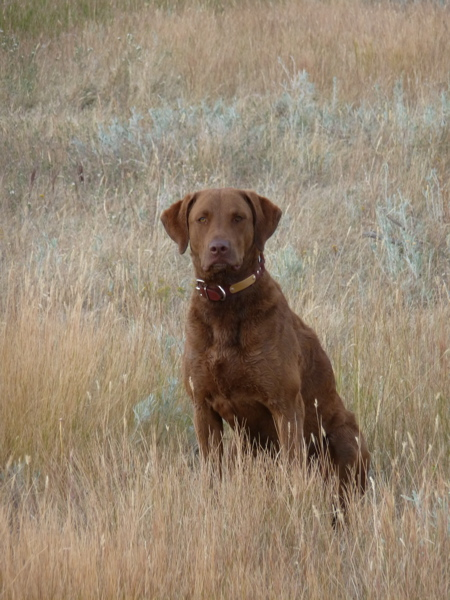 Yard Dogs-josie1.jpg