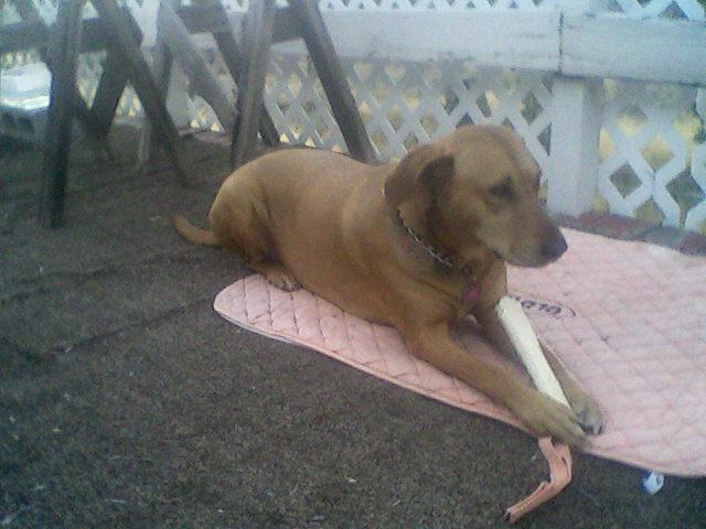 Yard Dogs-kodaor.jpg