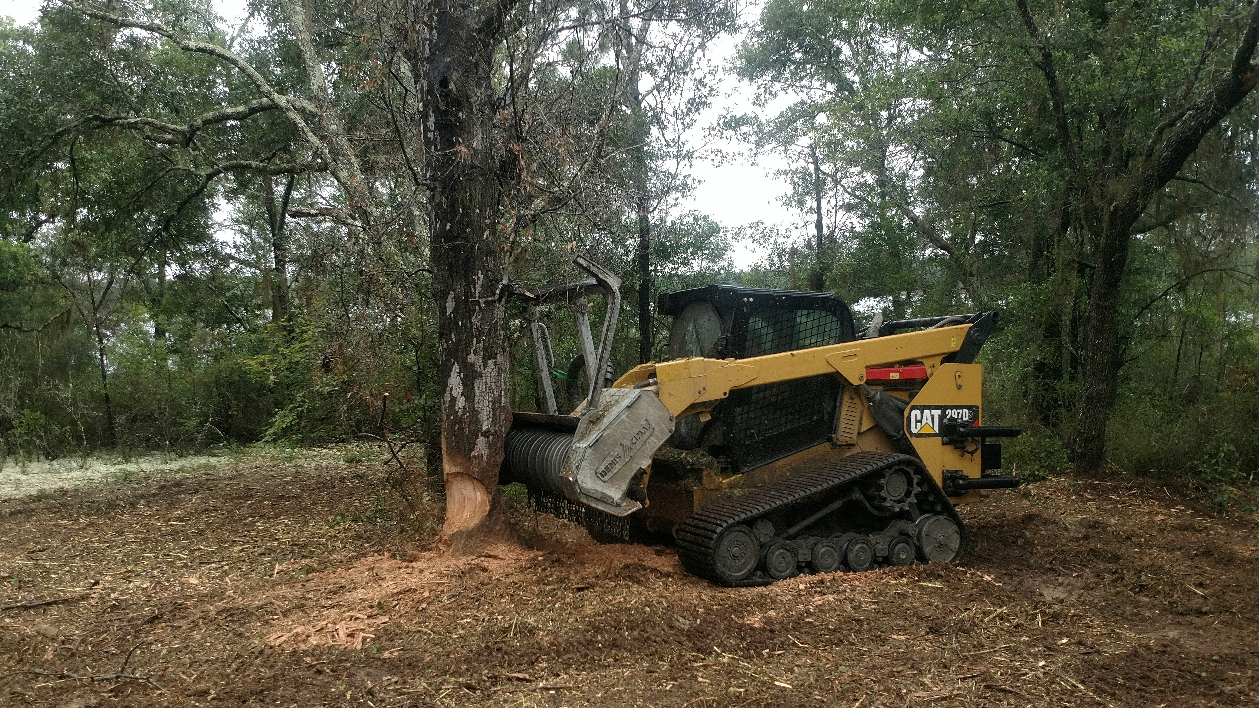 Forestry Mulching Before and After-land-clearing-dothan.jpg