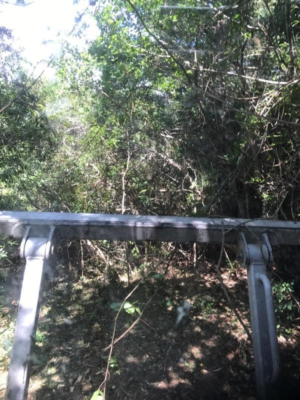 Forestry Mulching Before and After-land-clearing-niceville-florida.jpeg