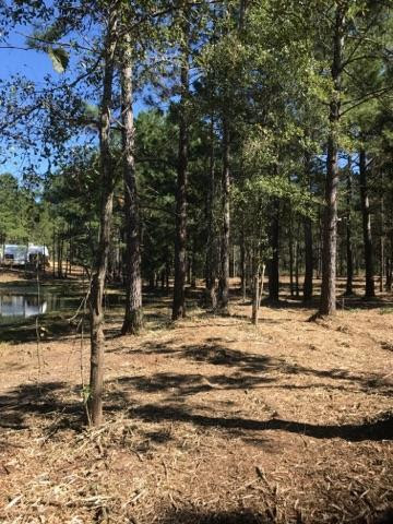 Forestry Mulching Before and After-land-clearing-ponce-de-leon.jpg