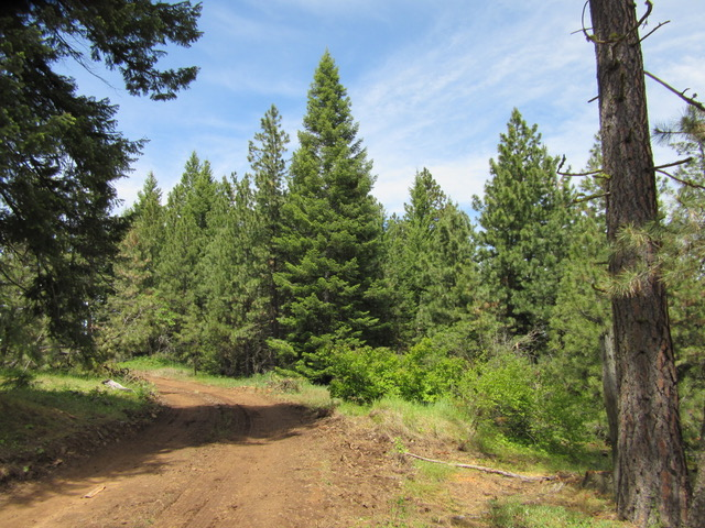 Forestry Mulching Before and After-logging-before.jpeg