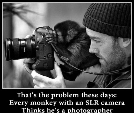 And Y'all thought contracting was tough-monkey-w-camera.jpg