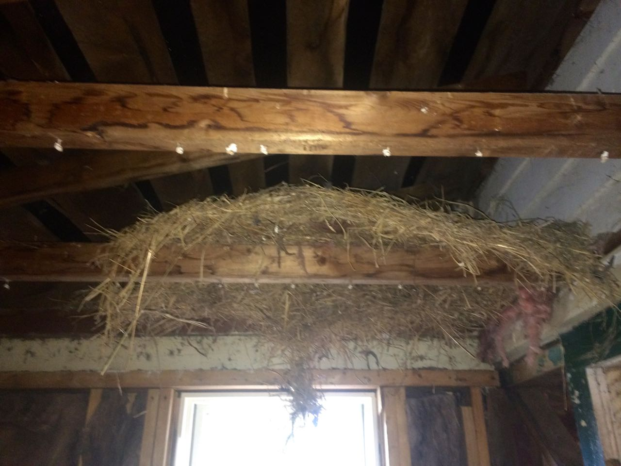 1800's Cabin w/ 50's,80's etc Addition-nest01.jpg