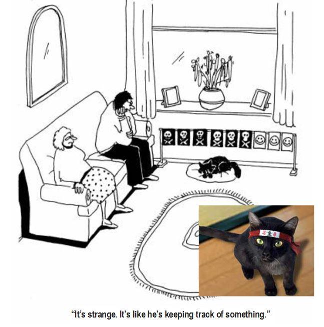 Whoops-ninja-cat.jpg