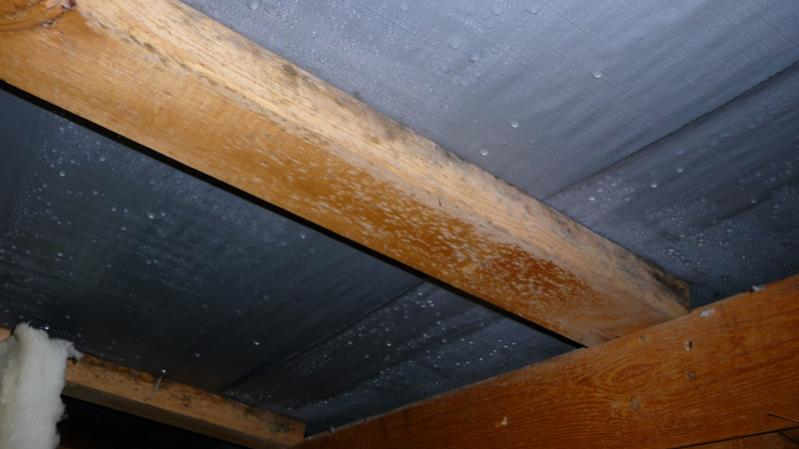 Alot Of Condensation And Mold In The Attic Of A 2 Year Old