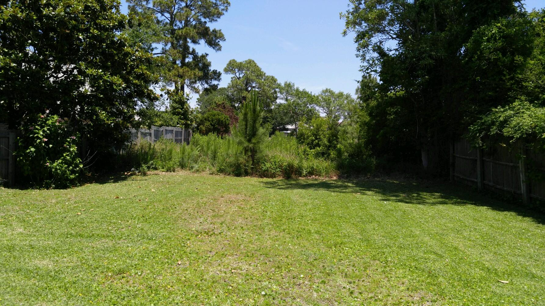 Forestry Mulching Before and After-panama-city-beach-brush-clearing-before.jpg