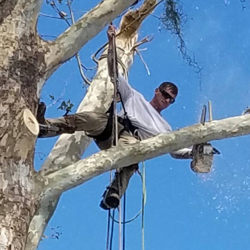 New! Member pictures thread,-port-orange-tree-service-daytona.jpg
