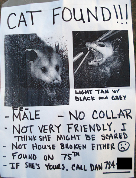 50060d1307456892t-lost-cat-possum_poster