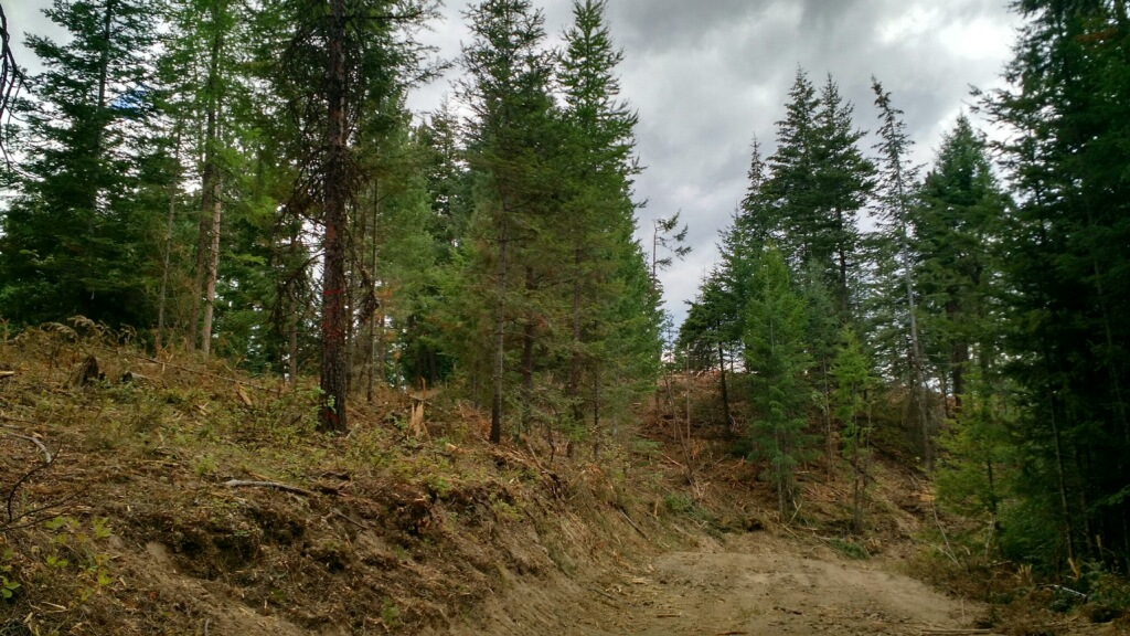 Forestry Mulching Before and After-post-thinning.jpg