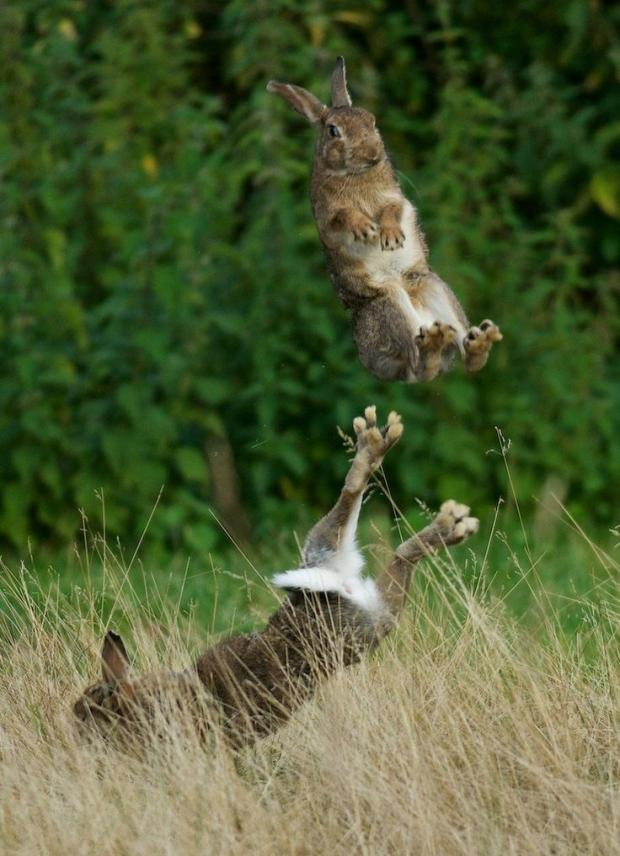 Random Pictures for Fun.-rabbits-fighting.jpg