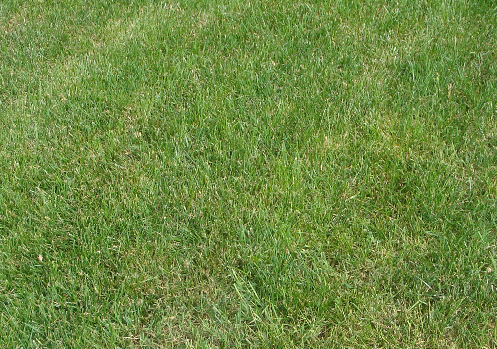 Newly Seeded Weed Infested Area-rear-prior-weeds-5.19.19.jpg